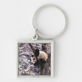 Panda cub playing on tree covered with snow, key ring