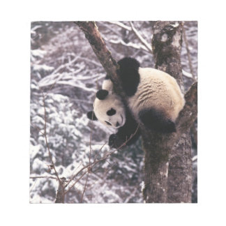Panda cub playing on tree covered with snow, notepads