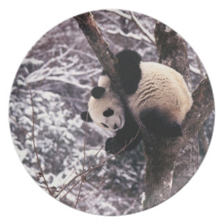 Panda cub playing on tree covered with snow, plates