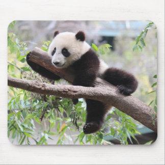Panda Cub Relaxing In a Tree Mouse Pad