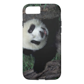 Panda cub with tree, Wolong, Sichuan Province, iPhone 8/7 Case