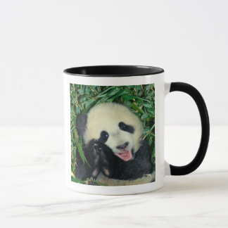 Panda cub, Wolong, Sichuan, China Mug