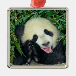 Panda cub, Wolong, Sichuan, China Silver-Colored Square Decoration