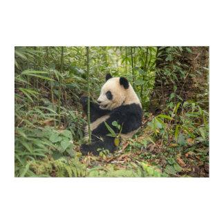 Panda Eating Bamboo Acrylic Wall Art