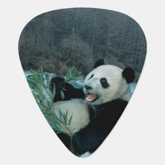 Panda eating bamboo by river bank, Wolong, 2 Guitar Pick
