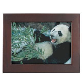 Panda eating bamboo by river bank, Wolong, 2 Keepsake Box