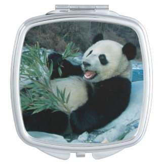 Panda eating bamboo by river bank, Wolong, 2 Makeup Mirrors