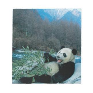 Panda eating bamboo by river bank, Wolong, 2 Notepad