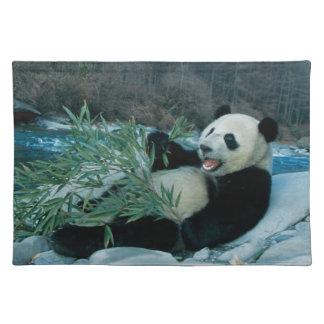 Panda eating bamboo by river bank, Wolong, 2 Placemat