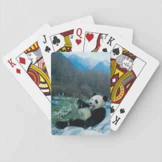 Panda eating bamboo by river bank, Wolong, 2 Playing Cards