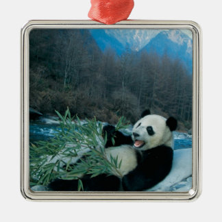 Panda eating bamboo by river bank, Wolong, 2 Silver-Colored Square Decoration