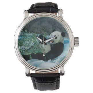 Panda eating bamboo by river bank, Wolong, 2 Watch