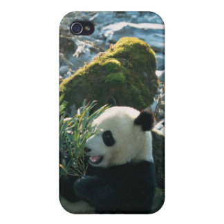 Panda eating bamboo by river bank, Wolong, 3 iPhone 4/4S Case