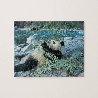 Panda eating bamboo by river bank, Wolong, Jigsaw Puzzle