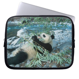 Panda eating bamboo by river bank, Wolong, Laptop Sleeve