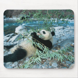 Panda eating bamboo by river bank, Wolong, Mouse Mat