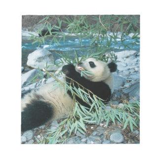 Panda eating bamboo by river bank, Wolong, Notepad