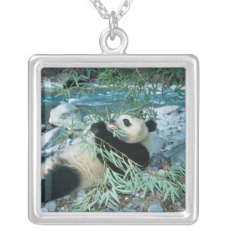 Panda eating bamboo by river bank, Wolong, Silver Plated Necklace