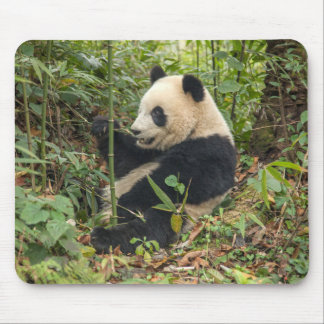 Panda Eating Bamboo Mouse Mat