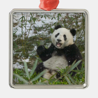 Panda eating bamboo on snow, Wolong, Sichuan, 2 Silver-Colored Square Decoration
