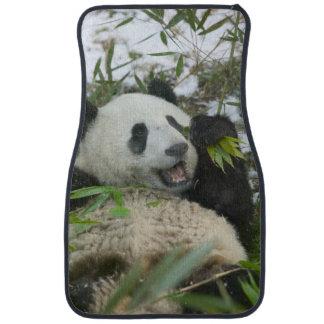 Panda eating bamboo on snow, Wolong, Sichuan, Car Mat