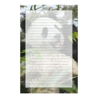 Panda eating bamboo on snow, Wolong, Sichuan, Custom Stationery