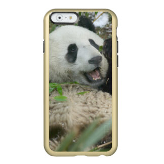 Panda eating bamboo on snow, Wolong, Sichuan, Incipio Feather® Shine iPhone 6 Case