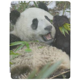 Panda eating bamboo on snow, Wolong, Sichuan, iPad Cover
