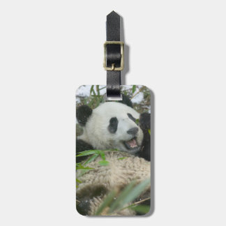 Panda eating bamboo on snow, Wolong, Sichuan, Luggage Tag