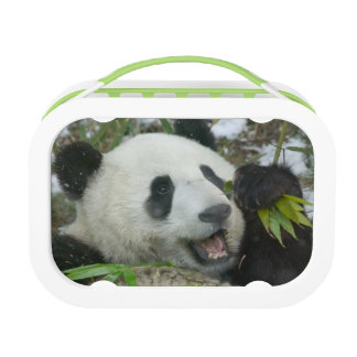 Panda eating bamboo on snow, Wolong, Sichuan, Lunchboxes