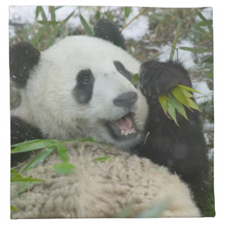 Panda eating bamboo on snow, Wolong, Sichuan, Napkin