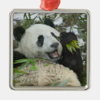 Panda eating bamboo on snow, Wolong, Sichuan, Silver-Colored Square Decoration