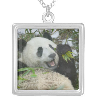 Panda eating bamboo on snow, Wolong, Sichuan, Silver Plated Necklace