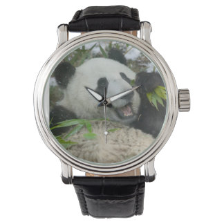 Panda eating bamboo on snow, Wolong, Sichuan, Wrist Watch