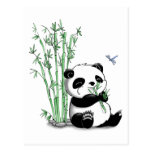 Panda Eating Bamboo Post Card