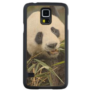 Panda eating bamboo shoots Alluropoda 2 Maple Galaxy S5 Case