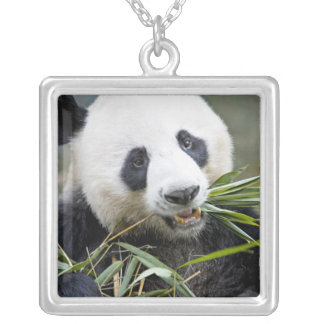Panda eating bamboo shoots Alluropoda 2 Silver Plated Necklace