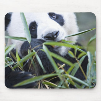 Panda eating bamboo shoots Alluropoda Mouse Mat