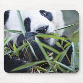 Panda eating bamboo shoots Alluropoda Mouse Pad