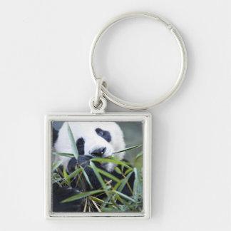 Panda eating bamboo shoots Alluropoda Silver-Colored Square Key Ring