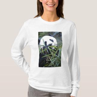 Panda eating bamboo shoots Alluropoda T-Shirt