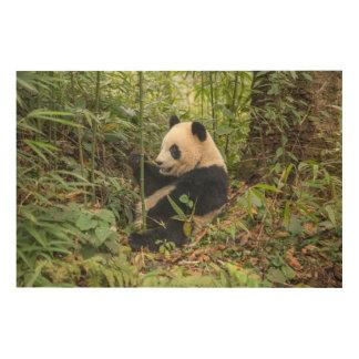 Panda Eating Bamboo Wood Canvas
