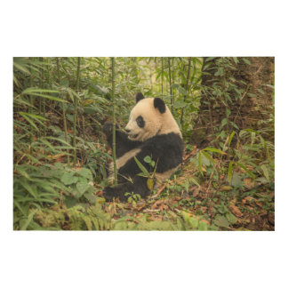 Panda Eating Bamboo Wood Print