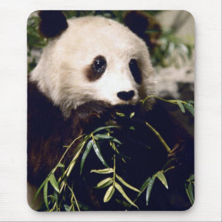Panda having a bit of lunch.  Mousepad