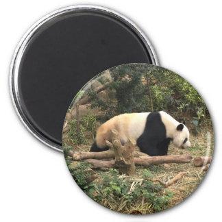 Panda in the wild magnet