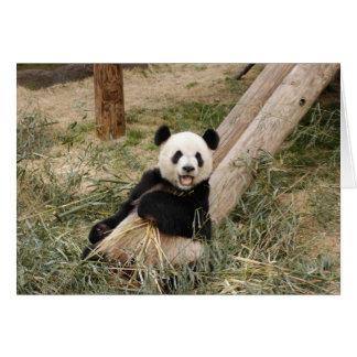 Panda M001 Card