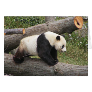 Panda on Log Card