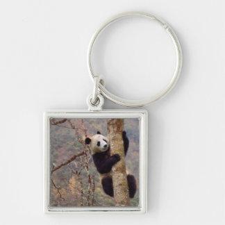 Panda on tree, Wolong, Sichuan, China Silver-Colored Square Key Ring