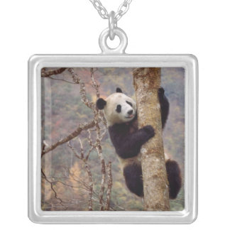 Panda on tree, Wolong, Sichuan, China Silver Plated Necklace