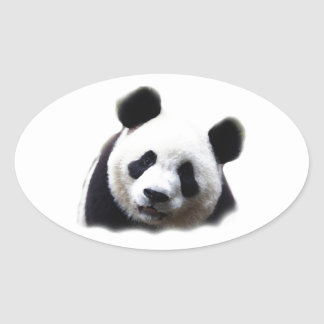 Panda Oval Sticker